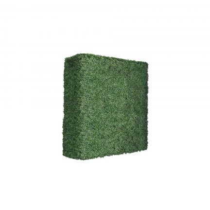 boxwood hedge 48 inches-3