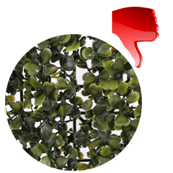 bad density of boxwood leaves