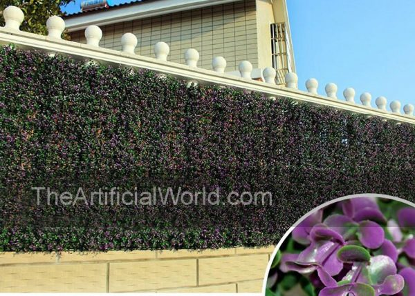 purple-boxwood-2
