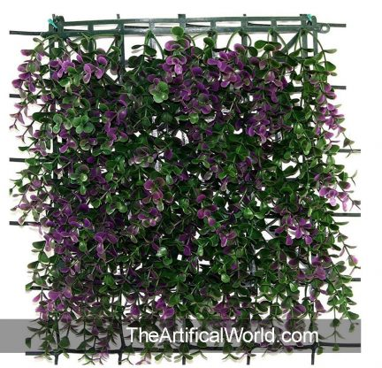 purple-boxwood