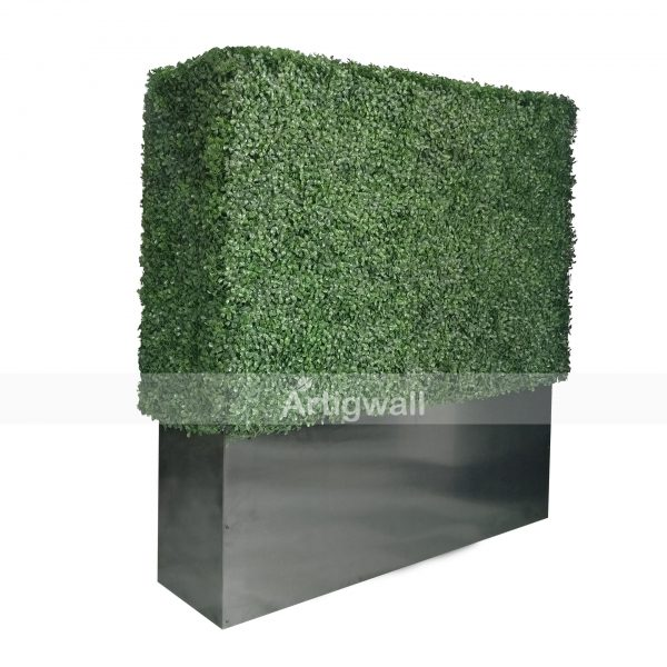 boxwood hedges 48