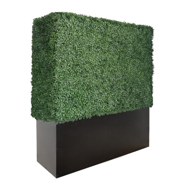 48 inches boxwood hedge wall