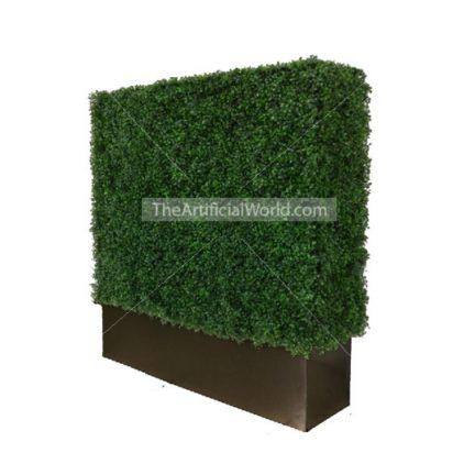 black hedge