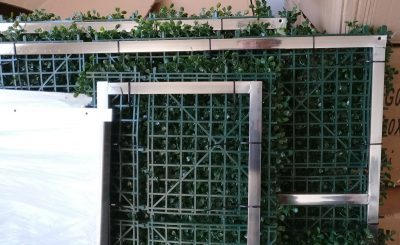 hedge detail