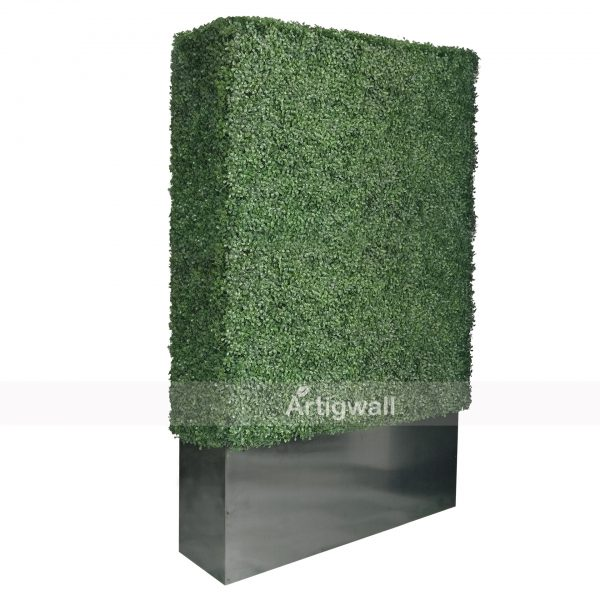 boxwood hedge 79 height
