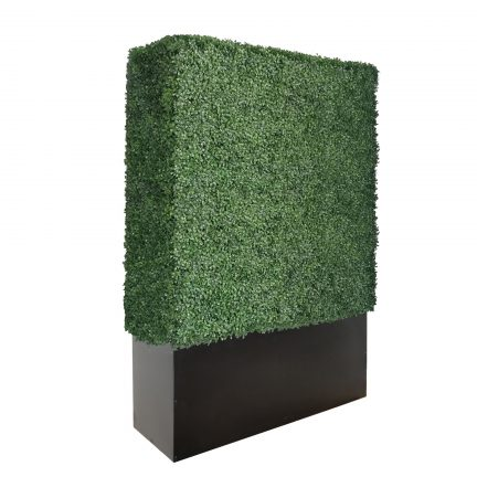 79 inches boxwood hedge wall