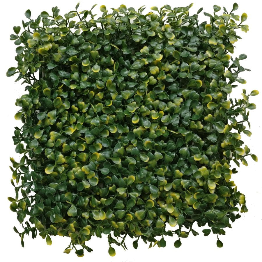 boxwood panel-yellow green
