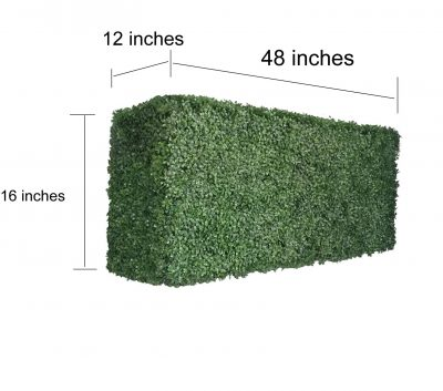 boxwood hedge 16 inches