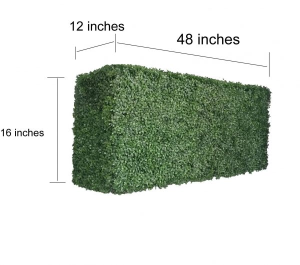 boxwood hedge 16 inches