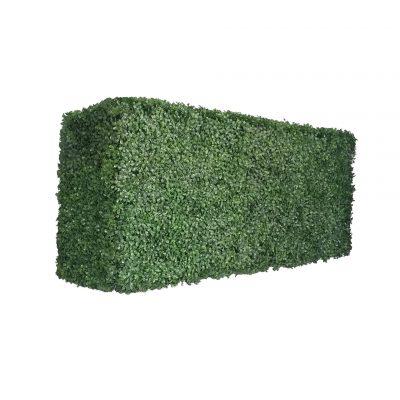 boxwood hedges 16 height