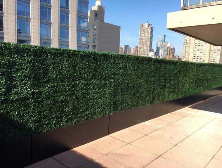 64 inches boxwood hedge
