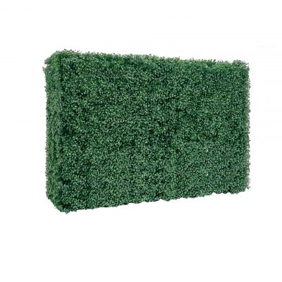 boxwood hedge wall no base