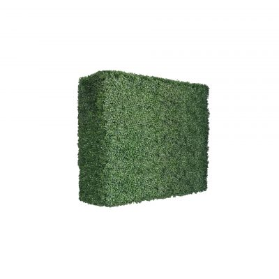boxwood hedges 30 inches