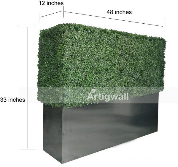 boxwood hedges 33-1