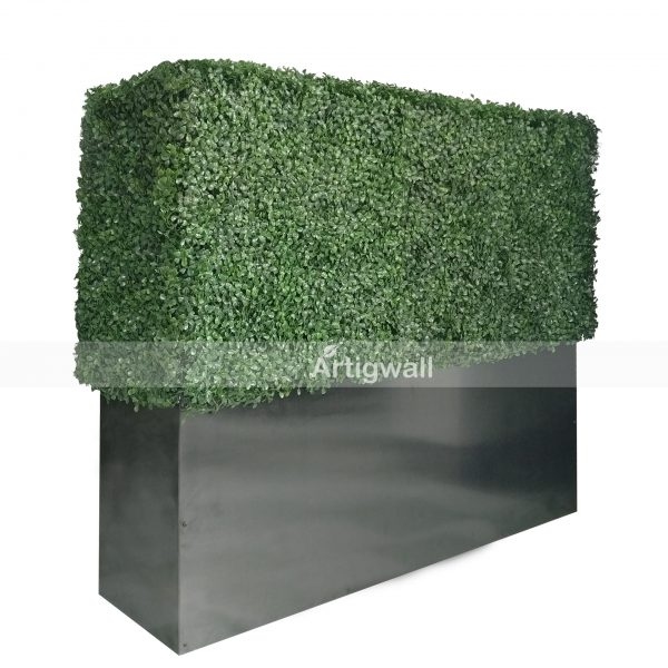 boxwood hedge 33 inches-3