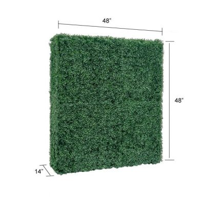 boxwood hedge wall backdrop with size