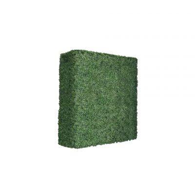 boxwood hedge 48 inches-3