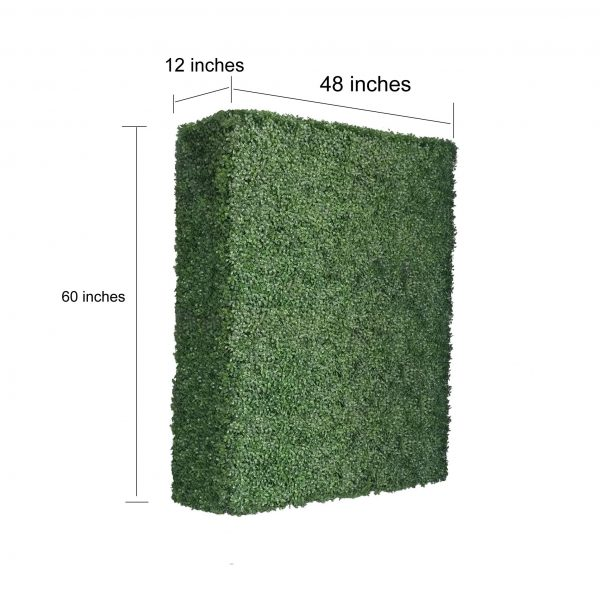 boxwood hedges 60 inches