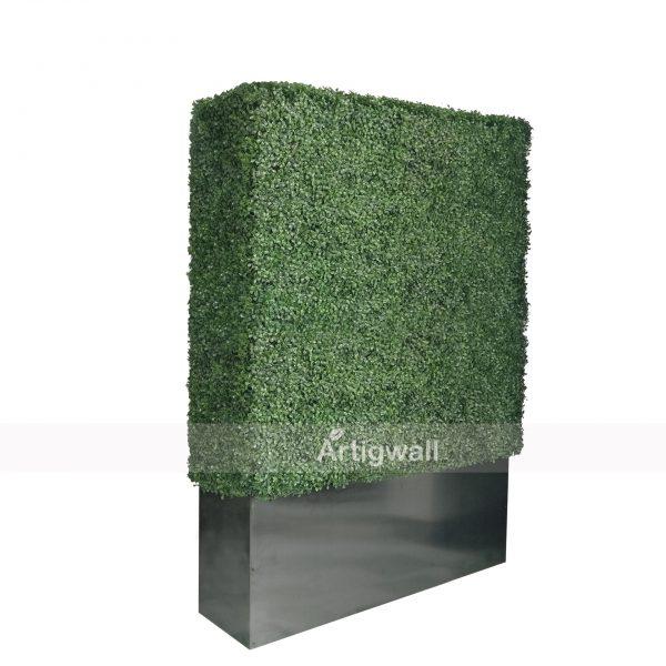 boxwood hedge 64 height