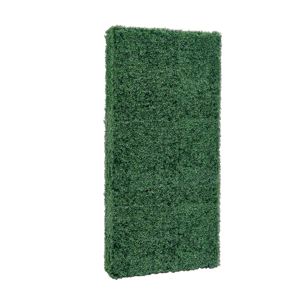 boxwood backdrop wall without planter