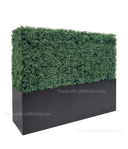 33 inches boxwood hedge