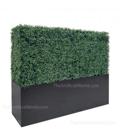 33 inches boxwood hedge