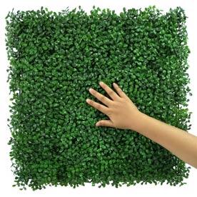 light-green boxwood