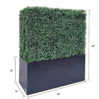boxwood hedge 48 size
