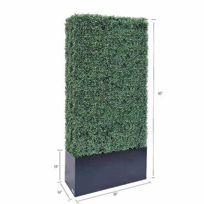 boxwood hedge 95 size