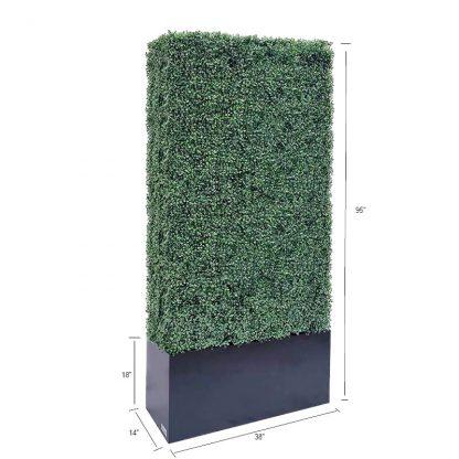 boxwood hedge 95 size