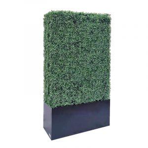 boxwood hedge 71 size